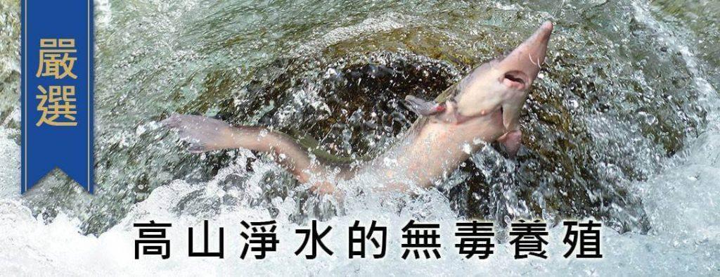 鱘龍魚哪裡買?鱘寶家嚴選無汙染食材!